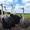Акция Взрослые Африканские страусы 6 лет 14 голов #1642667