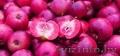 Яблони красномякотные