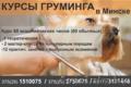 Курсы груминга,  стрижки собак в Минске.