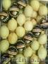 Овощи и фрукты из Испании и Марокко от производителя.