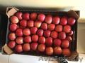 Яблоки польских сортов 70+ от производителя