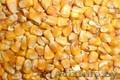 Кукуруза фуражная опт закупаем постоянно