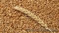 Пшеница продовольственная 4 класса